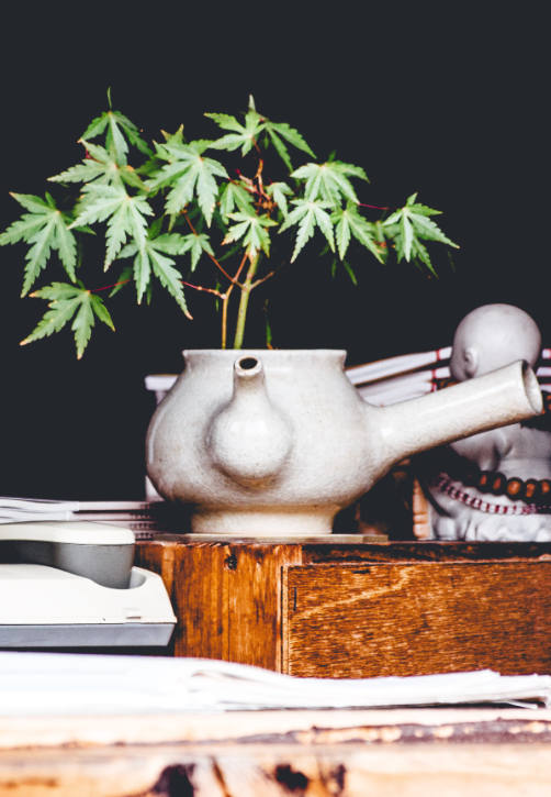 Cannabis Concierge and Wellness Collaborative in Buffalo, NY. NYS Medical Marijuana Certification, Holistic Wellness Practitioners